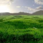 field_mountain