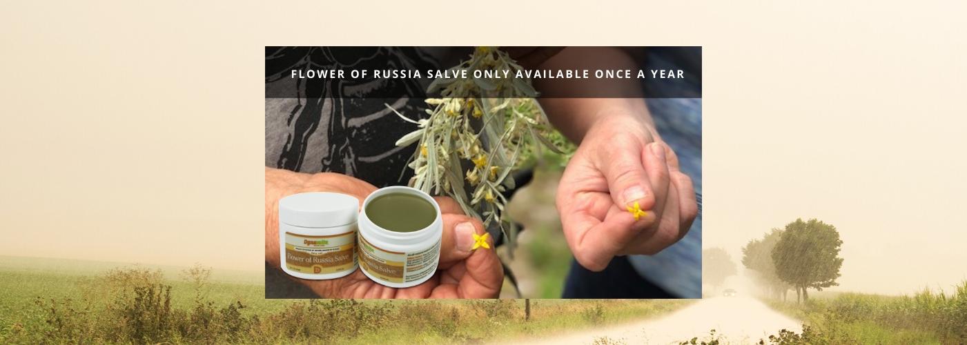 slider_ flower of russia flower3